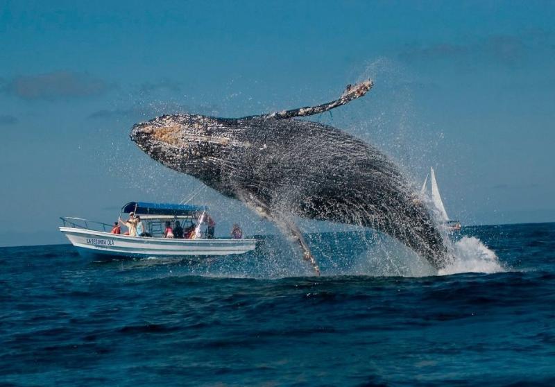 Bermuda Islands VP9/WA4PGM Tourist attractions