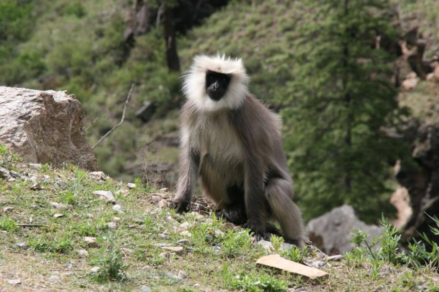 Bhutan A52ARJ A52LSS A52EQW A52AEF Tourist attractions spot
