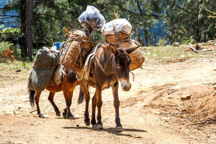 Бутан A52CVX DX Новости