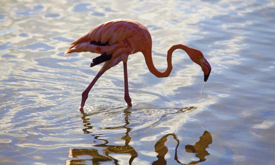 Bonaire Island PJ4/DG1SGW Tourist attractions