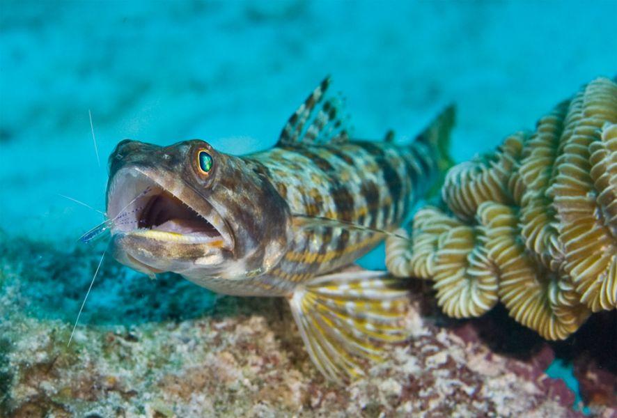 Bonaire Island PJ4/OH2BAD PJ4/OH1MA DX News