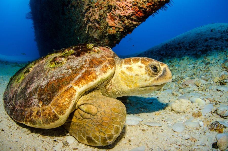 Bonaire Island PJ4/OH2BAD PJ4/OH1MA