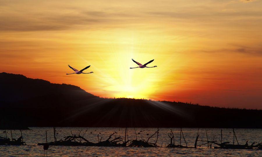 Остров Бонэйр PJ4A PJ4/K4BAI PJ4/KU8E PJ4/K2SC PJ4/W2LK Туристические достопримечательности Фламинго