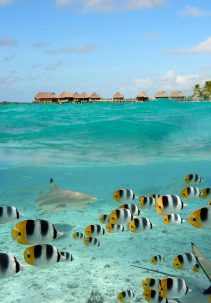 Bora Bora Island FO/KK6BT Tourist attractions