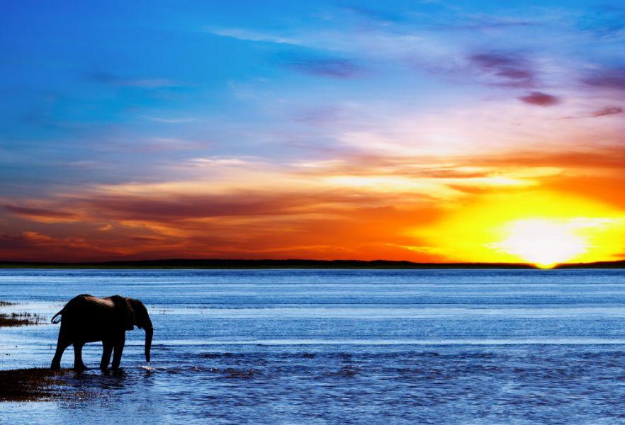 Ботсвана A25GR DX Новости Слон на водопое.