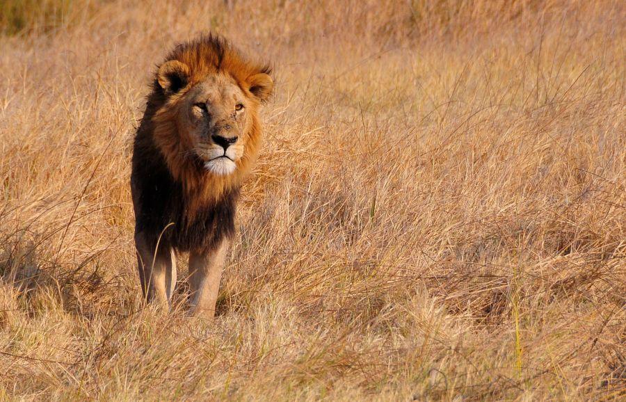 Ботсвана A25UK Национальный парк Мореми.