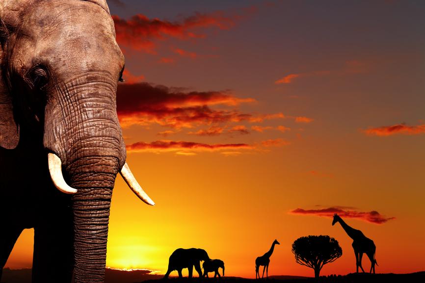 Ботсвана A25TQ DX Новости Африканский пейзаж Закат солнца