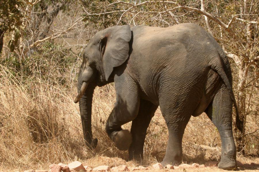 Burkina Faso XT2AFT DX News Elephant Nazinga.