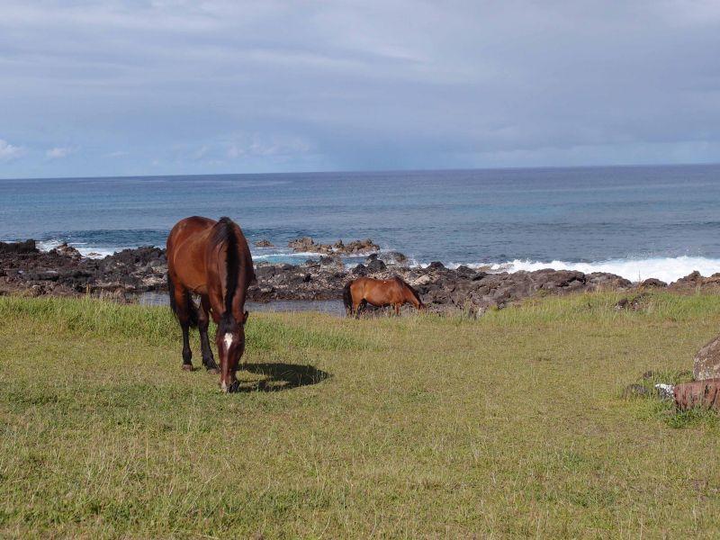 Остров Пасхи А может эта лошадь