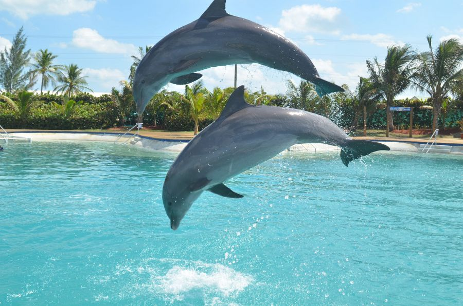 Cayman Islands ZF2CT Dolphin Show