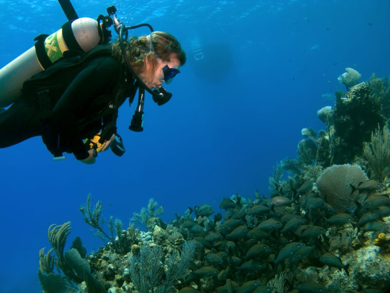 Cayman Islands ZF2ET DX News Woman Scuba Diver Looking at A school of Fish.