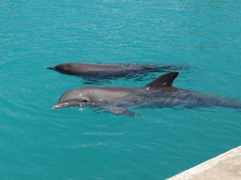 Каймановы острова ZF2ZZ Туристические достопримечательности Дельфины.