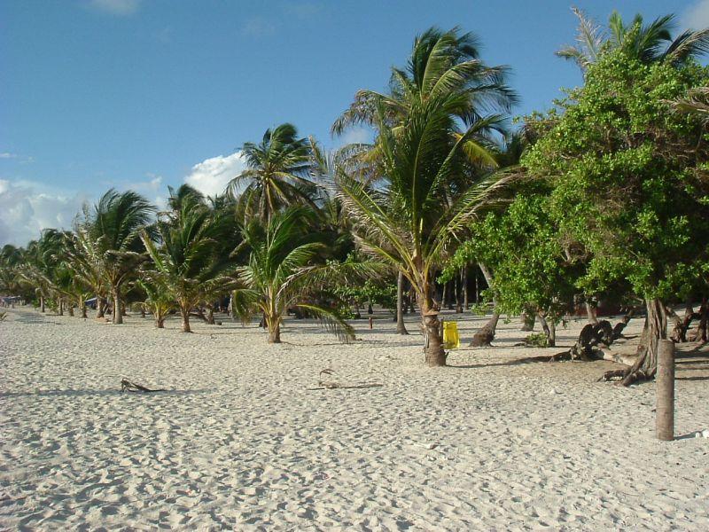 Cayo Sombrero Island DX News Palms