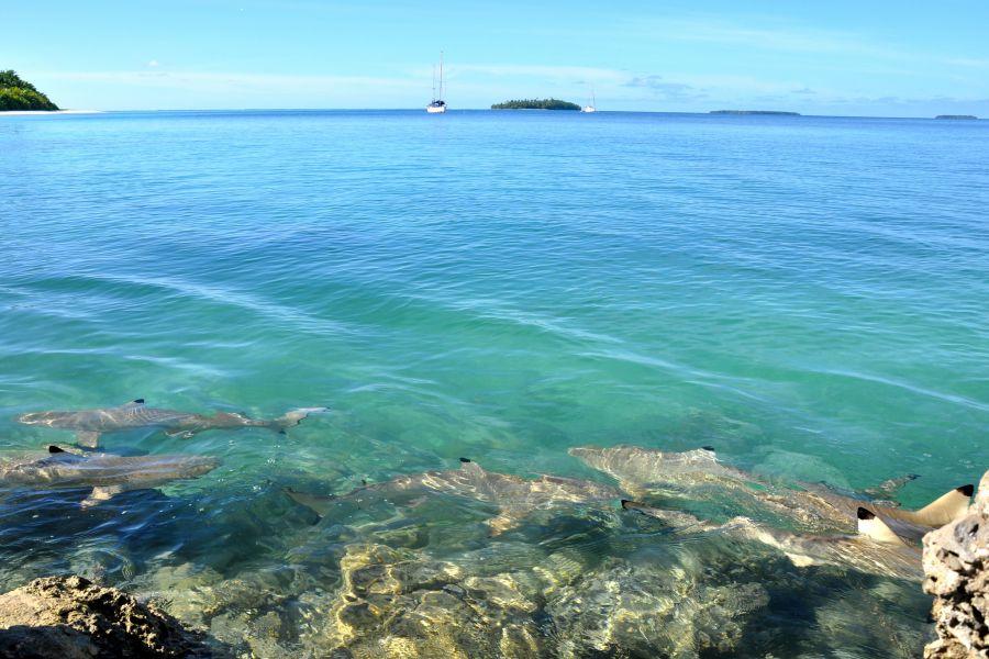 Chagos Archipelago VQ9RA Tourist attractions spot