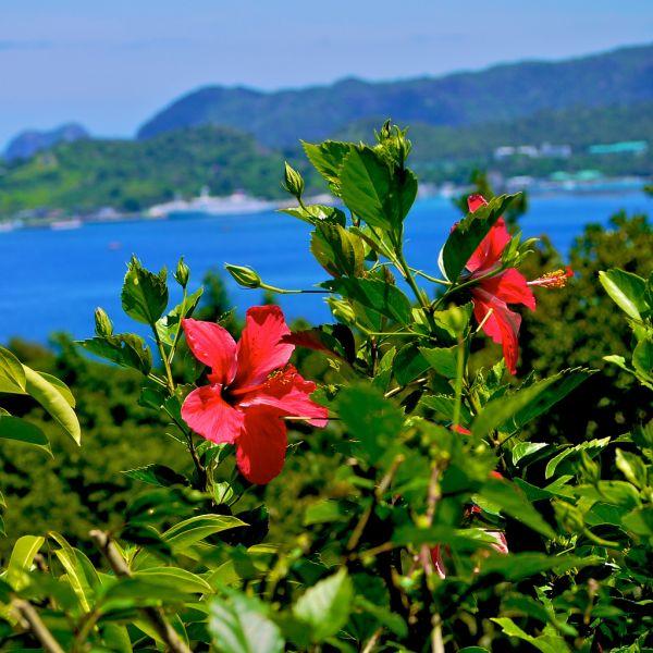 Остров Титидзима Огасавара JO1LVZ/JD1 Туристические достопримечательности