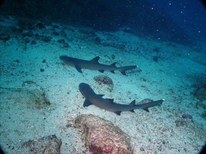 Cocos Island TI9/RA9USU TI9/TI2HMJ Tourist attractions