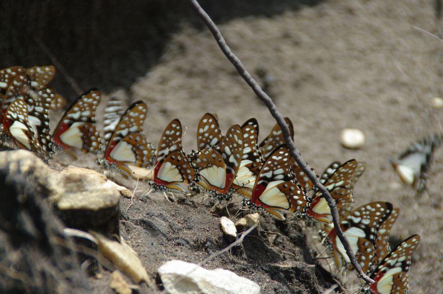 Республика Конго Браззавиль TN2MP TN2BJ Туристические достопримечательности Бабочки.