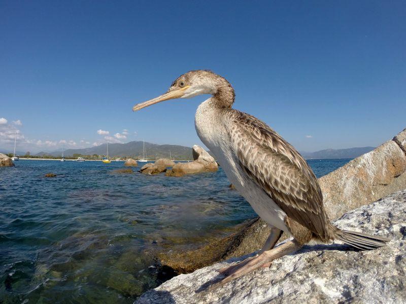Corsica Island TK2A DX News
