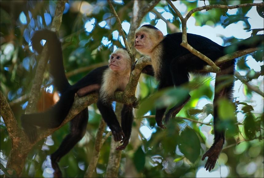 Коста Рика OK1NG/TI7 OK1IEC/TI7 Туристические достопримечательности
