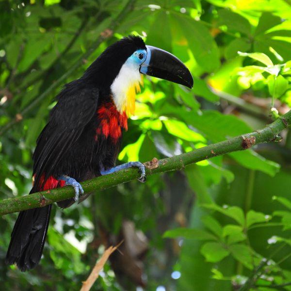 Costa Rica OK1NG/TI7 OK1IEC/TI7