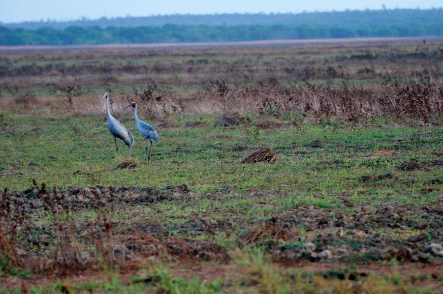 Остров Крокер Птицы
