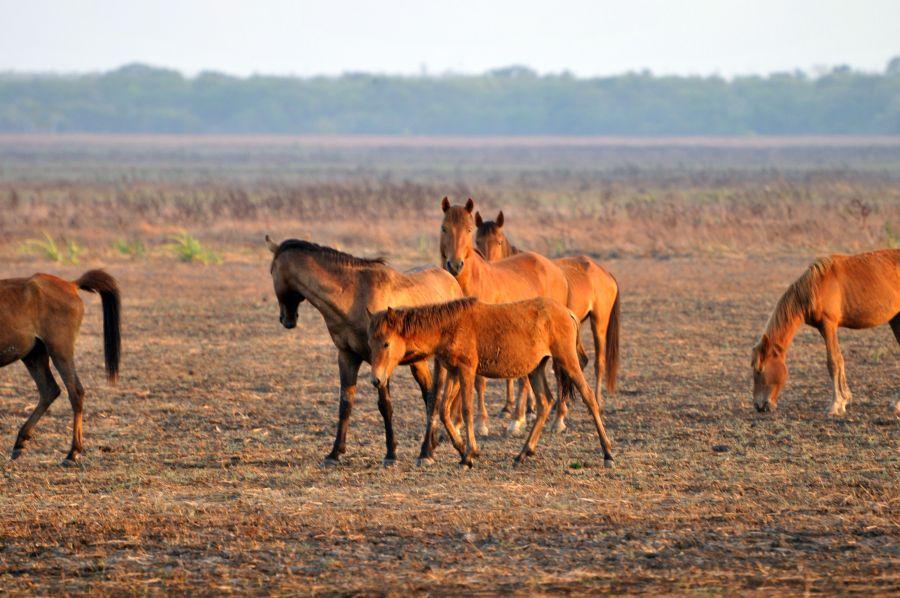 Остров Крокер Дикие лошади Табун