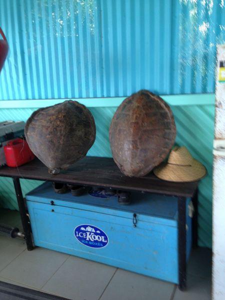 Остров Крокер Панцыри черепах