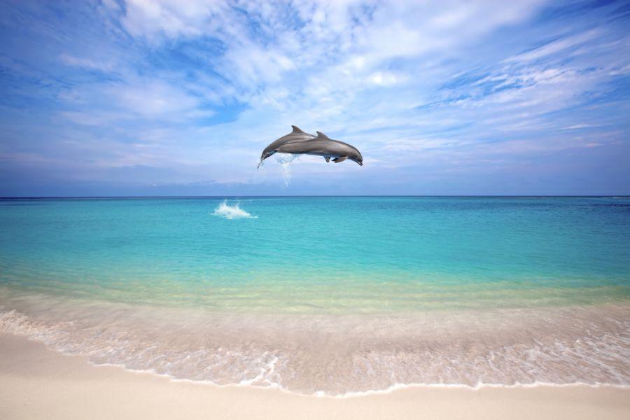 Curacao Island PJ2/PG5M DX News