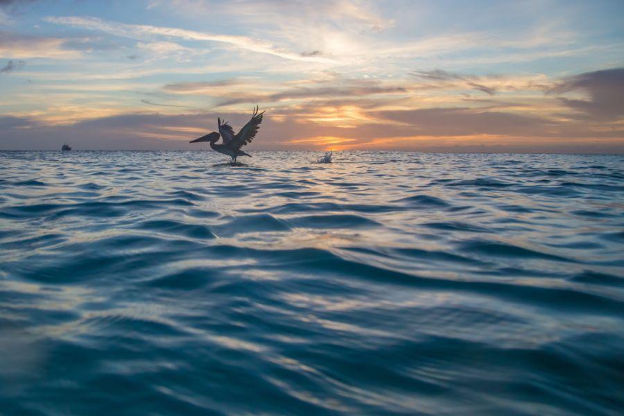 Curacao Island PJ2/AI5P