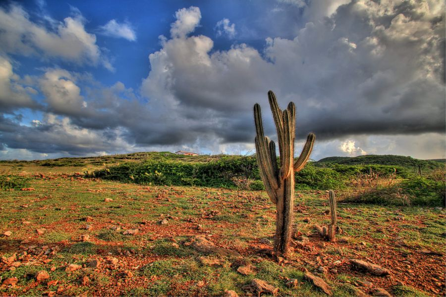 Curacao Island PJ2/DF8ZH Tourist attractions spot Cactus.