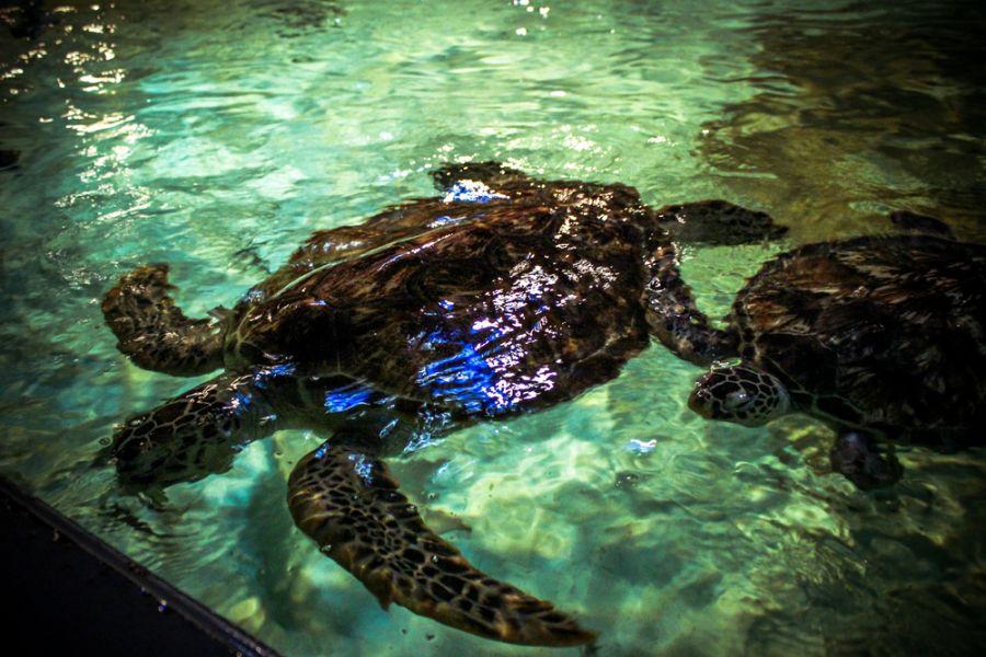 Curacao Island PJ2/IK7YTT Tourist attractions spot