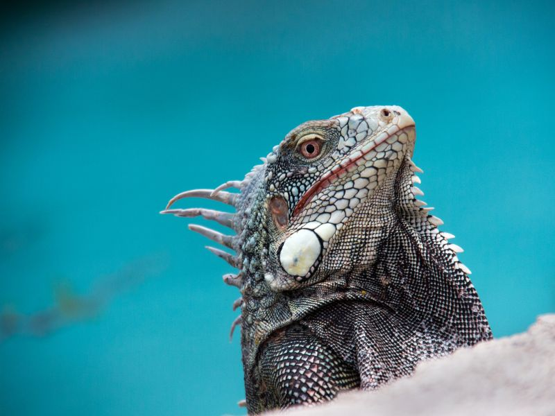 Curacao Island PJ2/NF9V