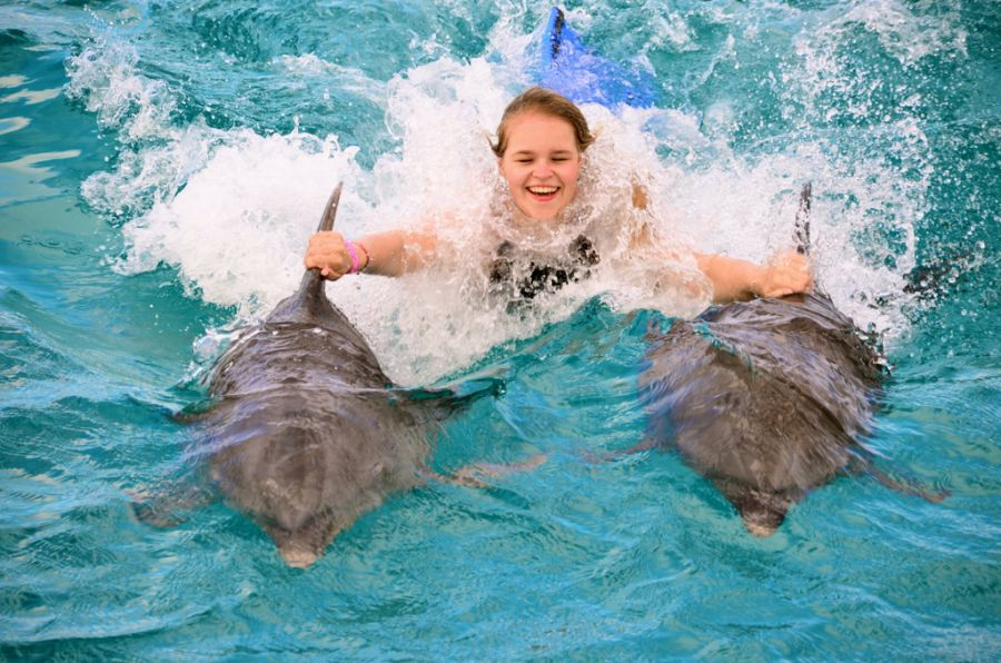 Curacao Island PJ2/PA3HGT DX News Dolphins