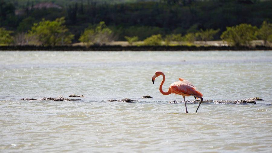 Остров Кюрасао PJ2/VA3EGG Фламинго в районе соляных промыслов.