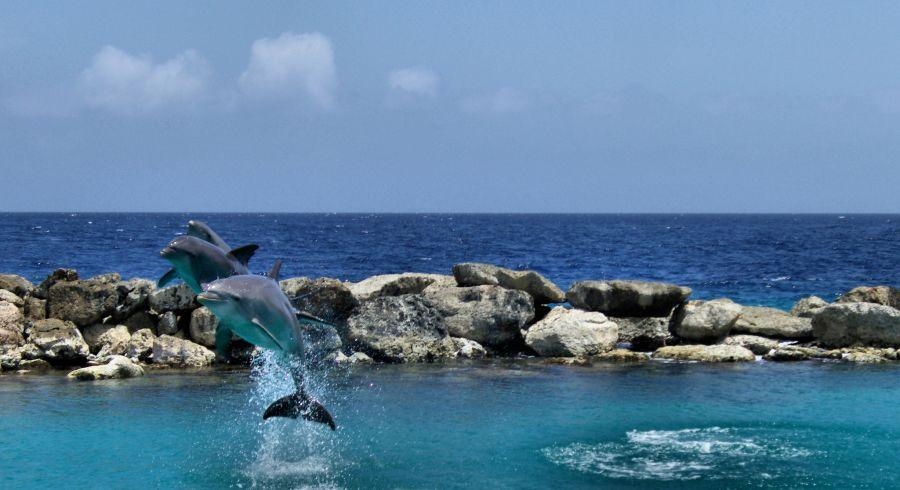 Остров Кюрасао PJ2/VA7AM Дельфины.