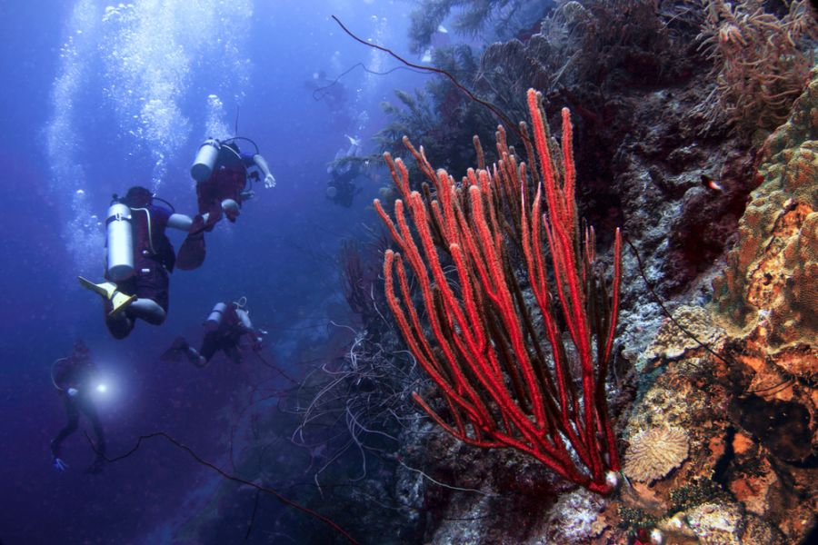 Curacao Island PJ2/W4PGM PJ2/W4VAB Tourist attractions spot Scuba divers explore the plunging wall known as the Blue Edge.
