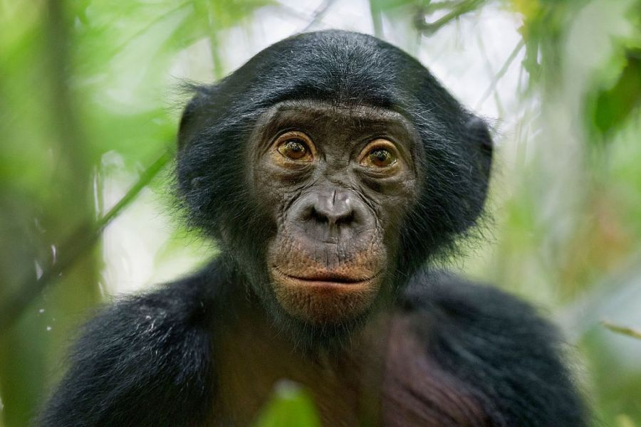 Democratic Republic of Congo 9Q0HQ/1 9Q0HQ Tourist attractions spot
