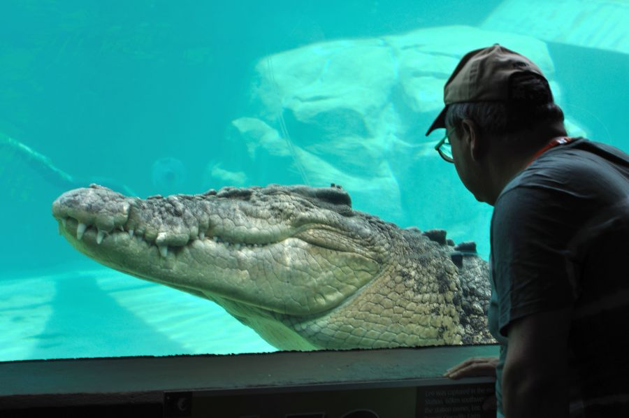 Дарвин Крокодил Вот это размеры