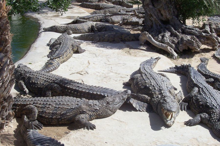 Djerba Island 3V8SM Tourist attractions spot Crocodile park.