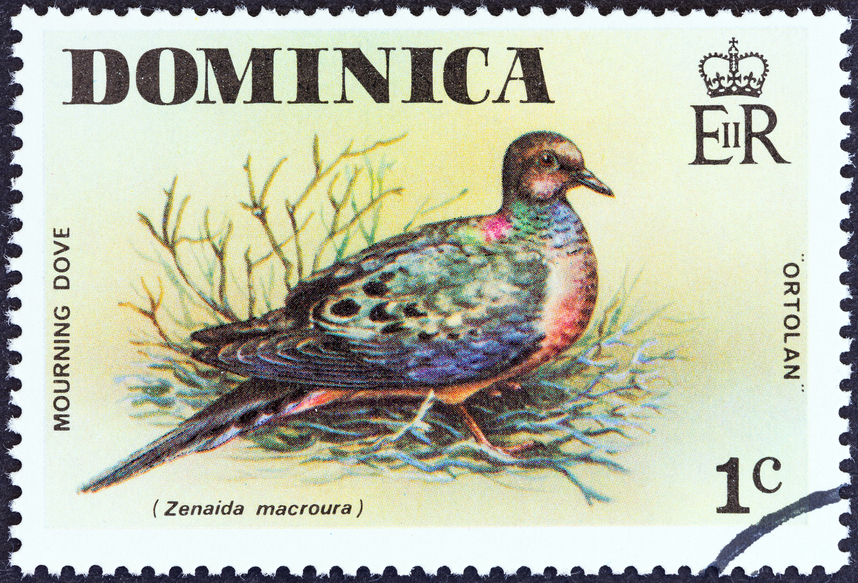 Dominica Island J79JA DX News Stamp