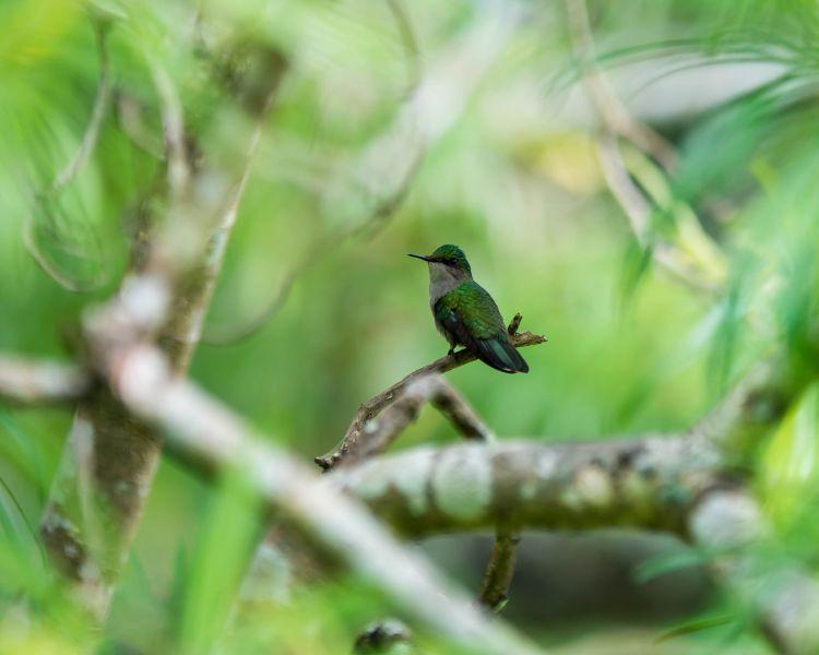 Dominica Island J79M Tourist attractions spot Hummingbird.