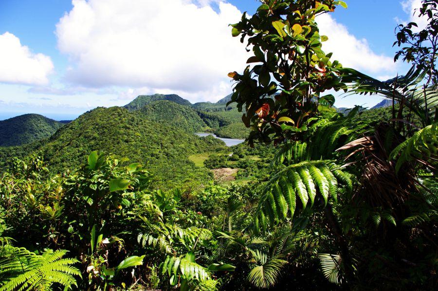 Dominica Island J79RZ DX News