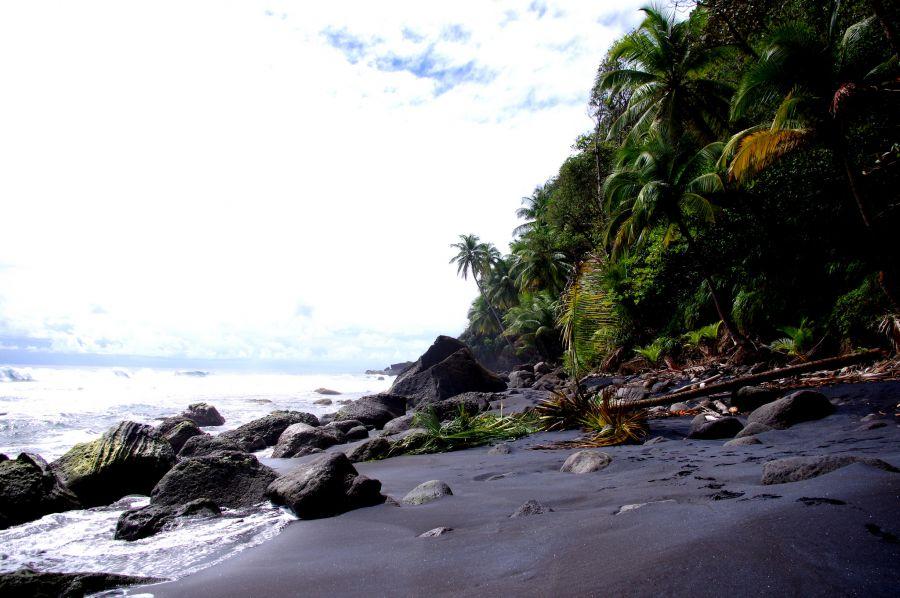 Dominica Island J79XF Wavine cyrique.