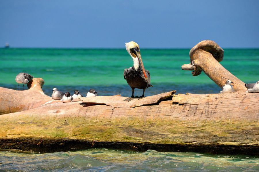 Dominican Republic HI3/HA3JB Tourist attractions spot