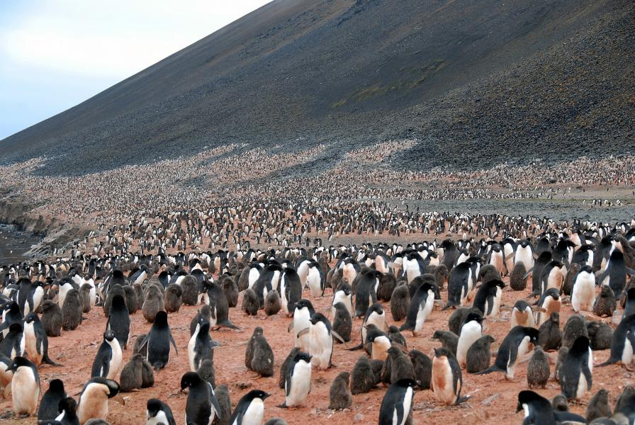 Adelie Penguin Colony, Adelie Land, Antarctica FT3YL DX News