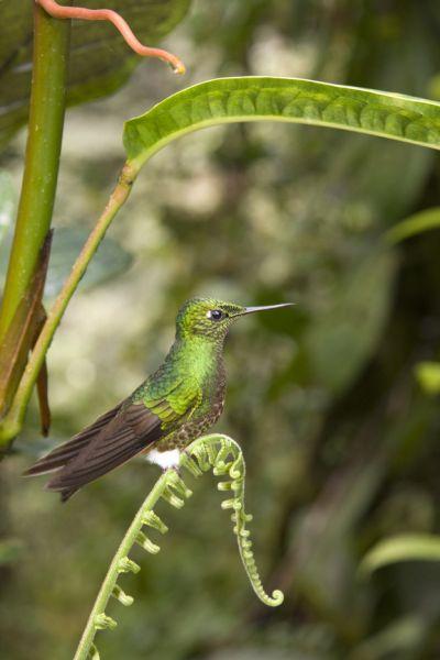 Эквадор HC1PF Туристические достопримечательности