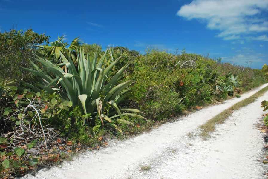 Eleuthera Island C6AWO C6AKX Tourist attractions