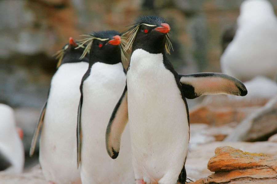 Falkland Islands VP8DRC