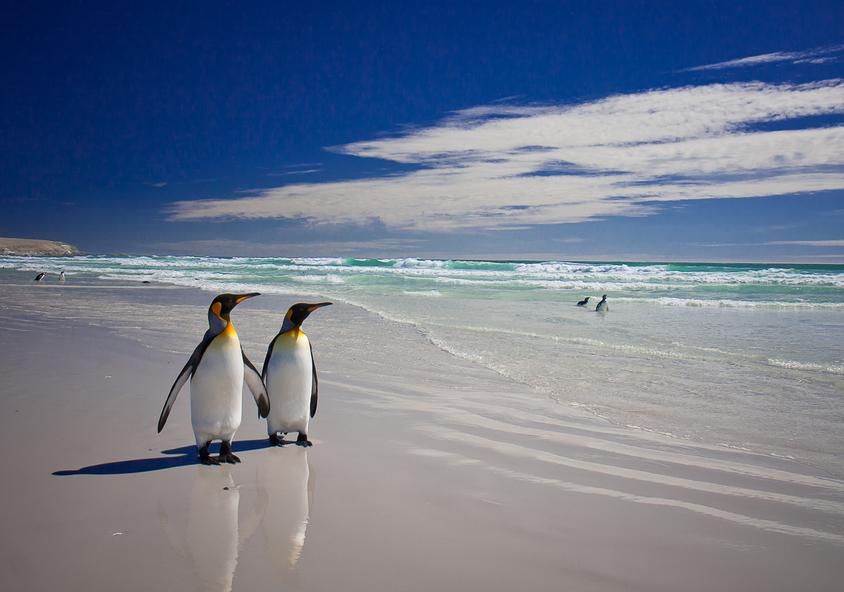 Фолклендские острова VP8KF Туристические достопримечательности