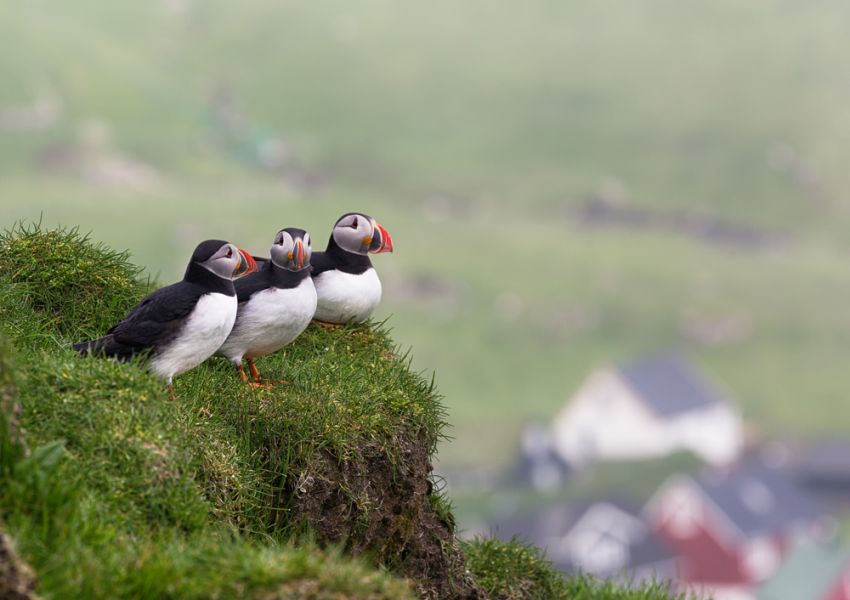 Faroe Islands OY/LA4OFA Tourist attractions spot Three Puffins above Mykines village in Faroe islands